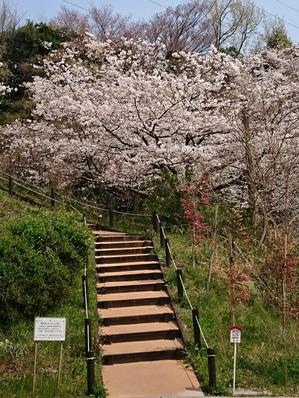 2018桜①.jpg
