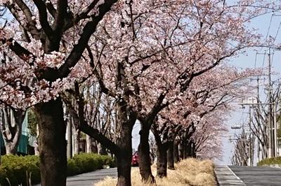 2018桜③.jpgのサムネイル画像