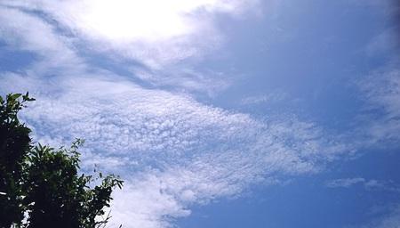 5月のうろこ雲.jpg