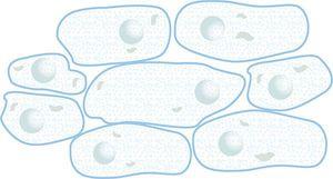 細胞.jpg