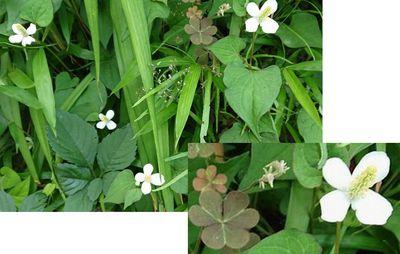 白い花③.jpg