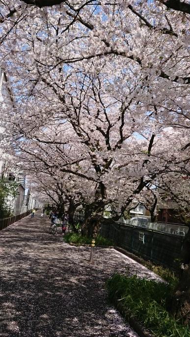 2020桜③.jpg
